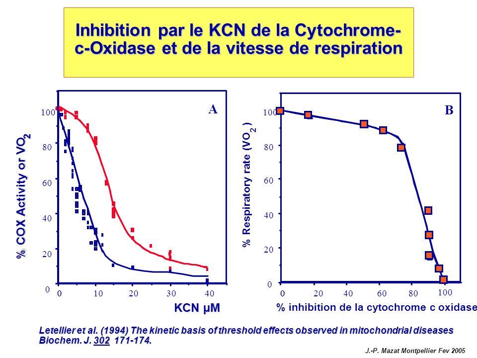 Inhibition par le KCN de la Cytochrome-c-Oxidase et de la vitesse de respiration