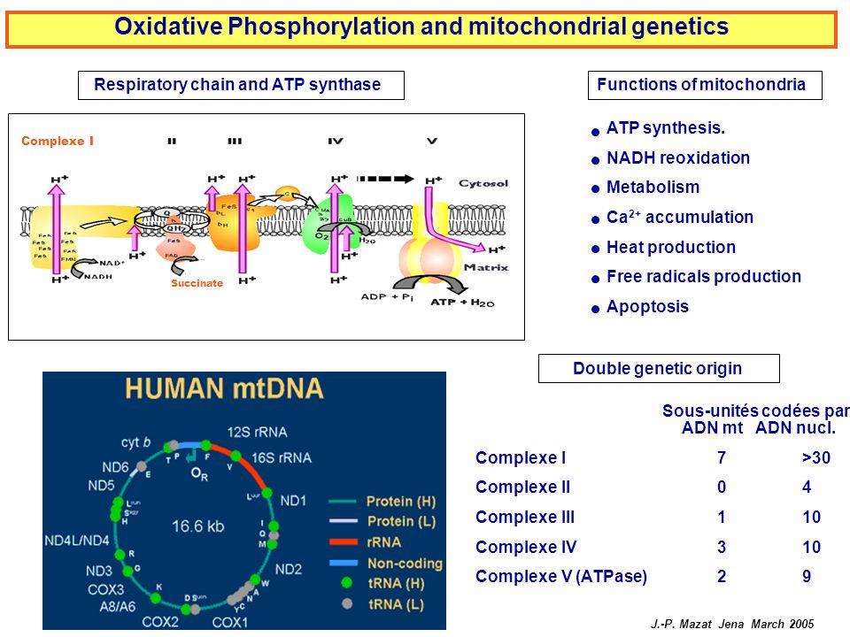 Oxidative Phosphorylation and mitochondrial genetics