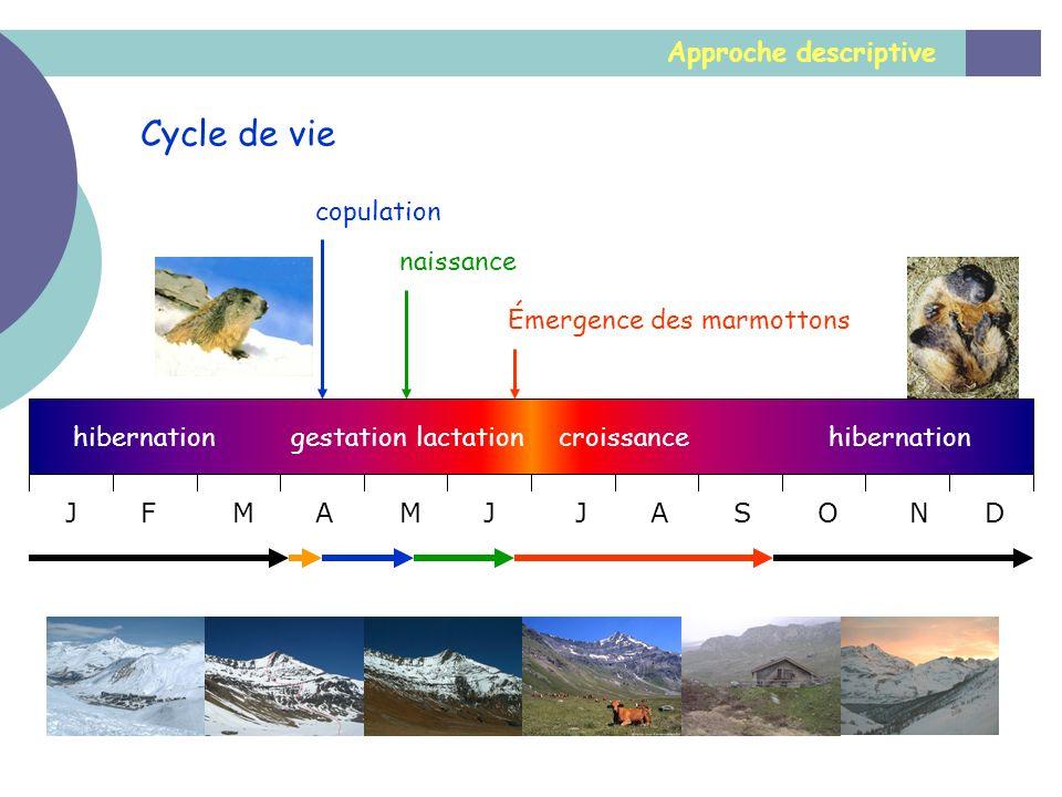 Cycle de vie Approche descriptive copulation naissance