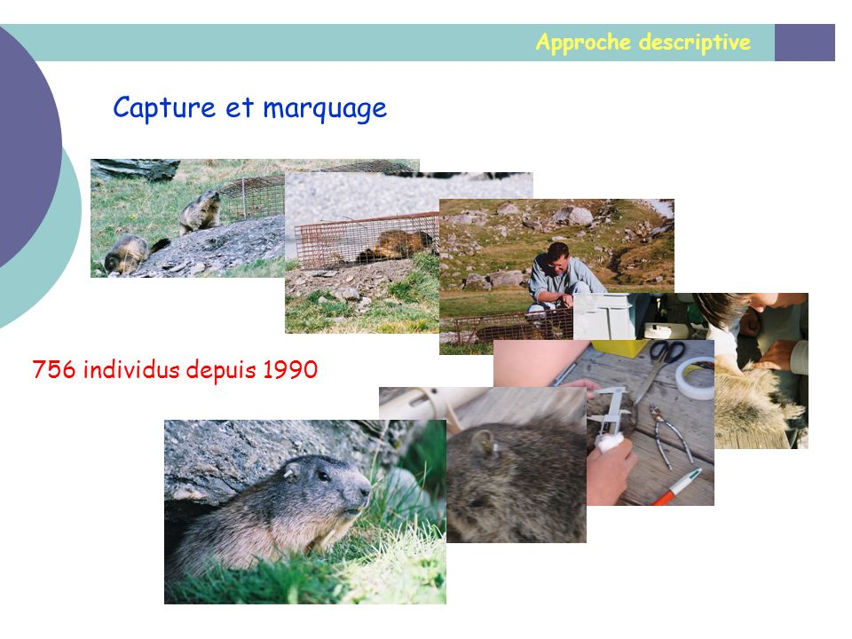 Approche descriptive Capture et marquage 756 individus depuis 1990
