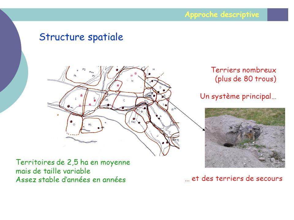 Structure spatiale Approche descriptive Terriers nombreux