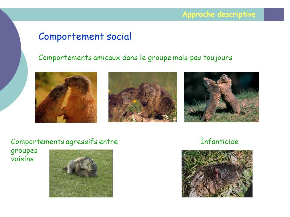 Comportement social Approche descriptive