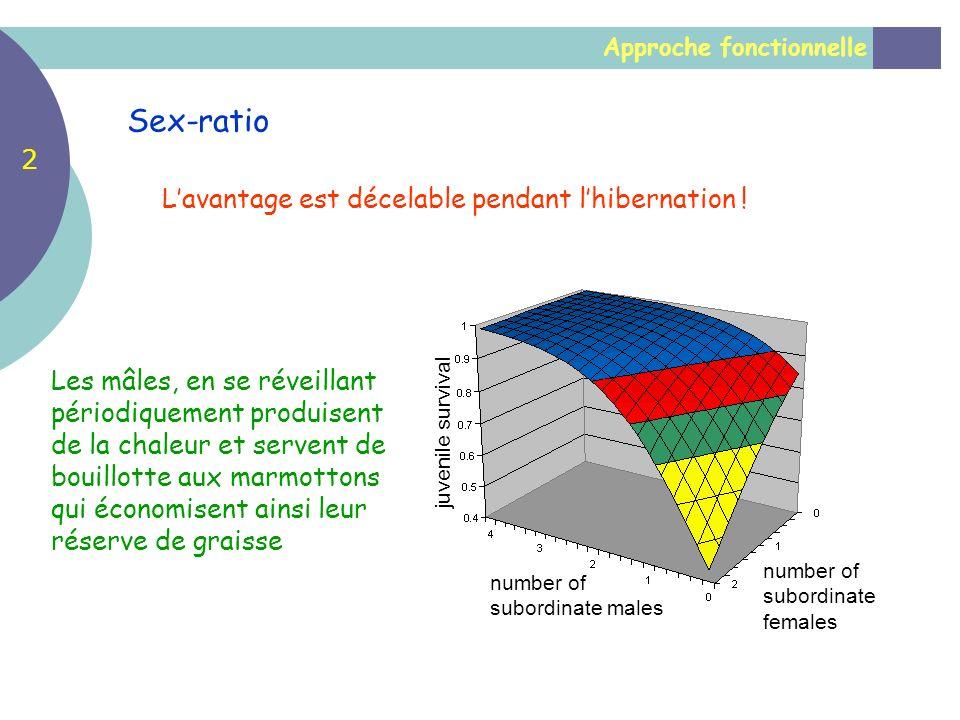 Sex-ratio 2 L'avantage est décelable pendant l'hibernation !