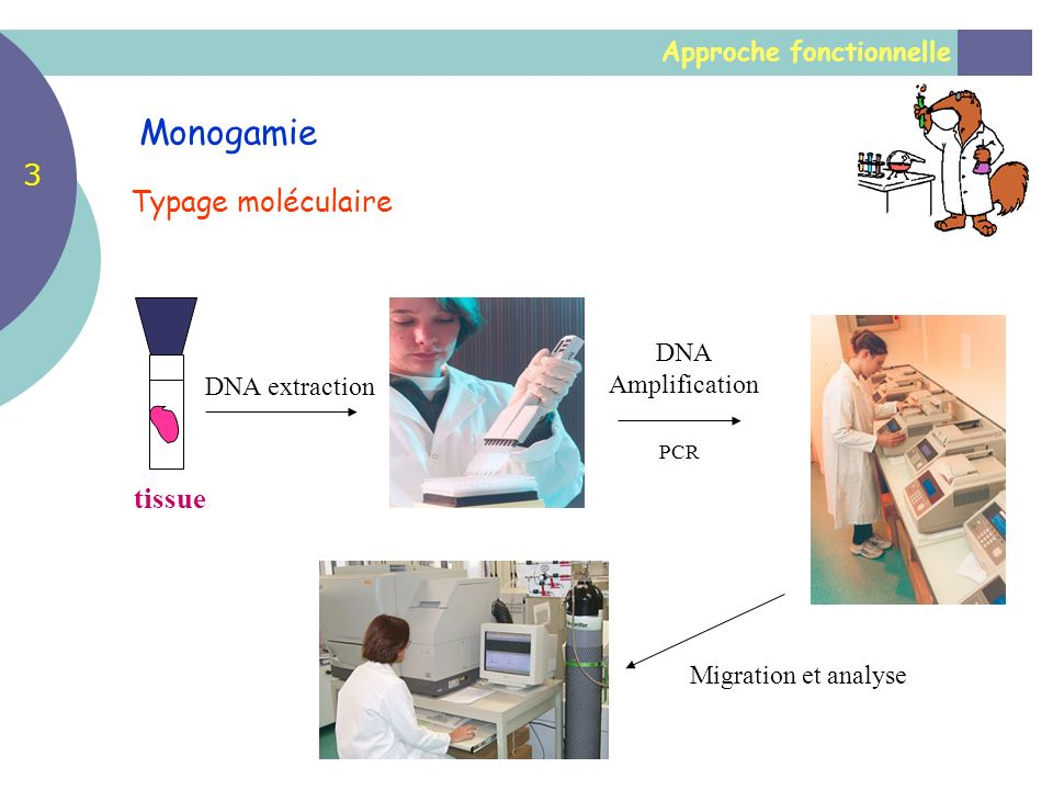 Monogamie 3 Typage moléculaire tissue Approche fonctionnelle DNA