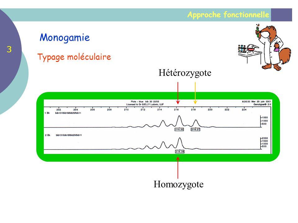 Monogamie Hétérozygote Homozygote 3 Typage moléculaire