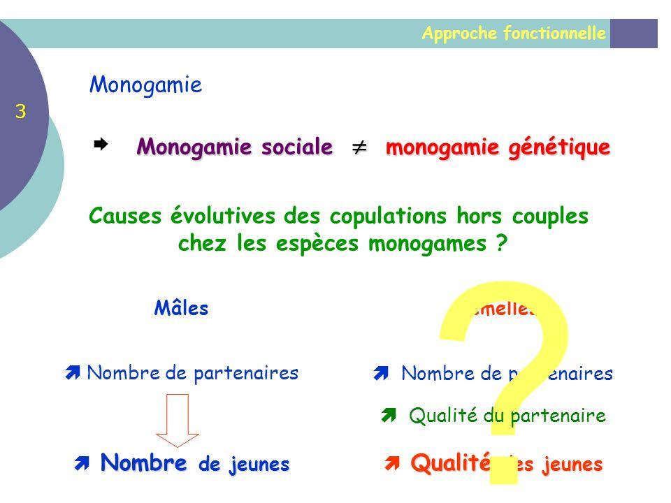 Monogamie Monogamie sociale  monogamie génétique