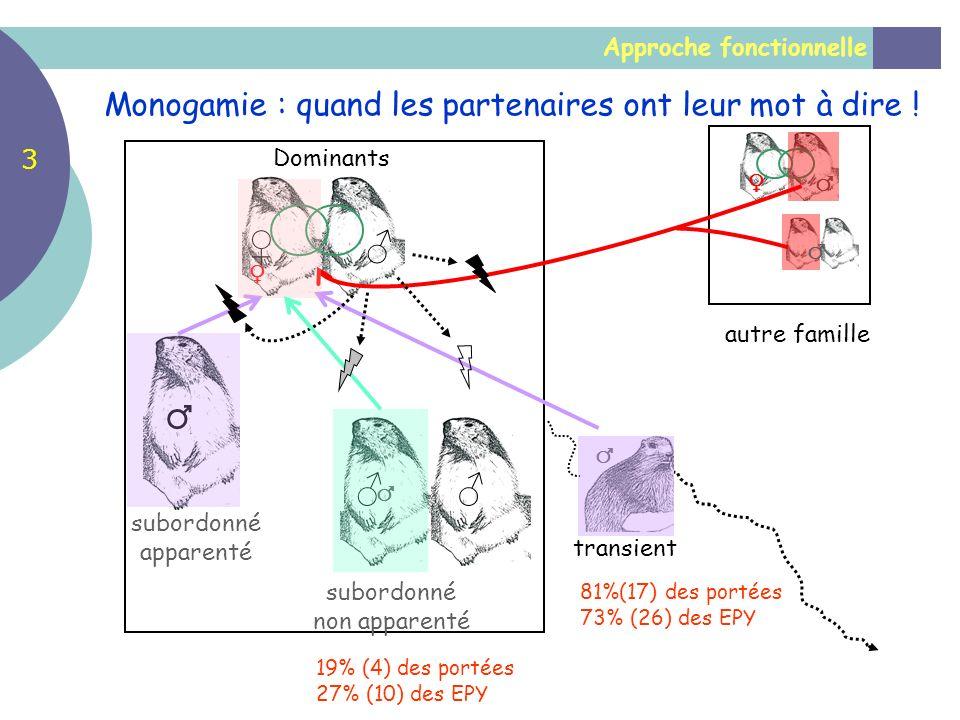 ♀ ♂ ♂ ♂ Monogamie : quand les partenaires ont leur mot à dire ! 3