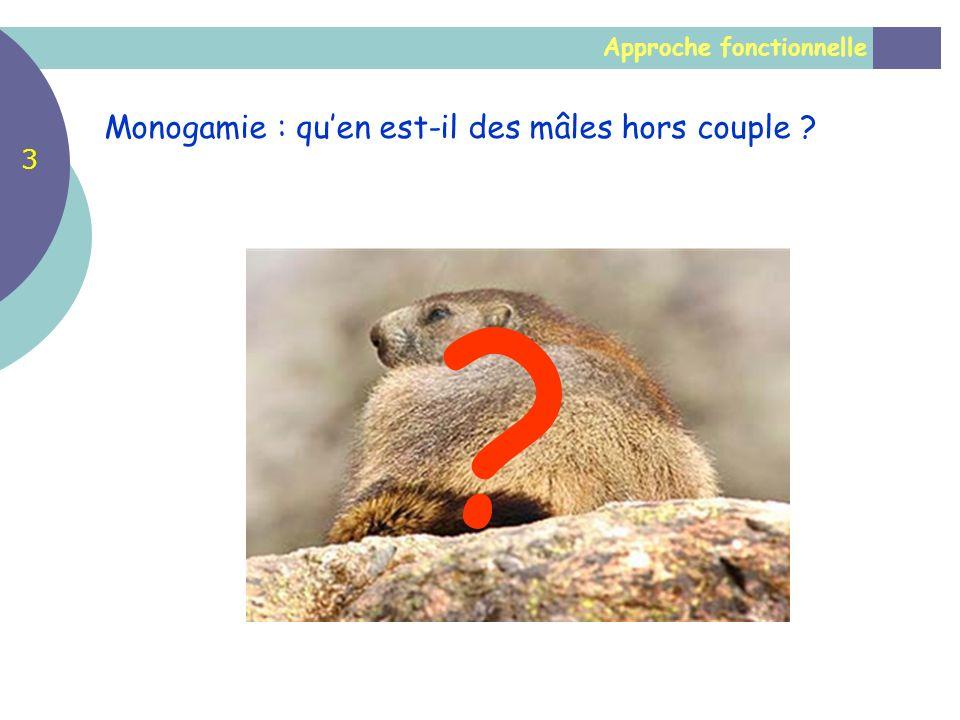 Monogamie : qu'en est-il des mâles hors couple 3