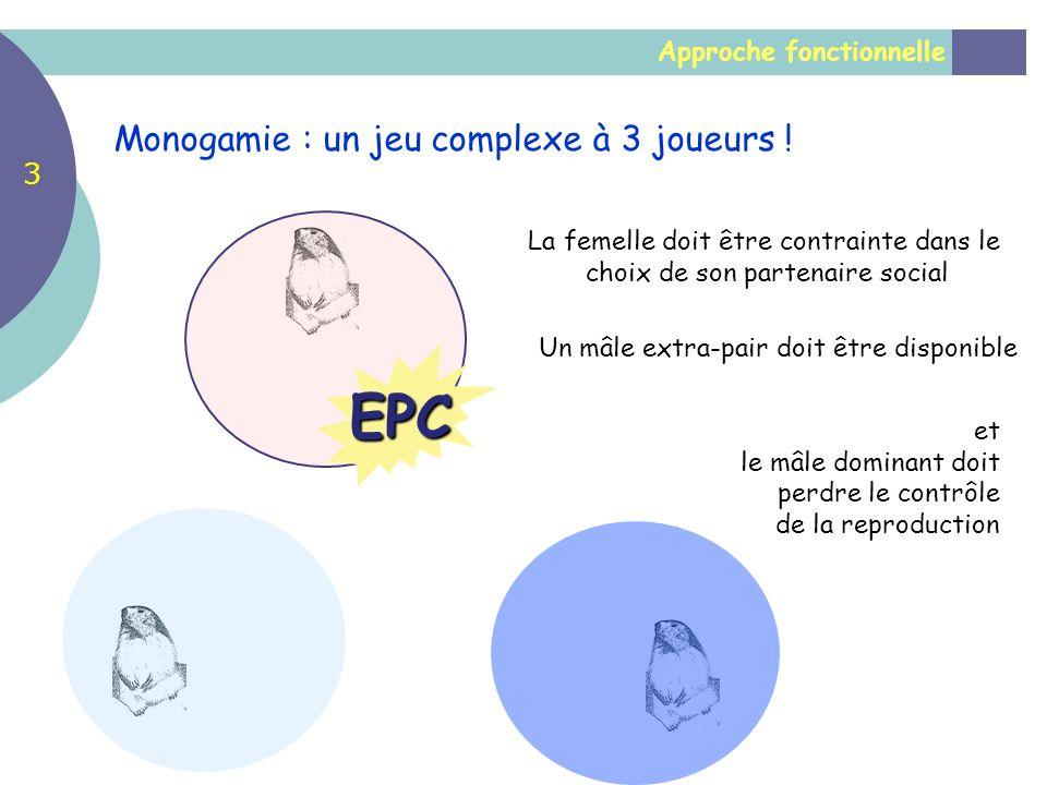 EPC Monogamie : un jeu complexe à 3 joueurs ! 3 Approche fonctionnelle