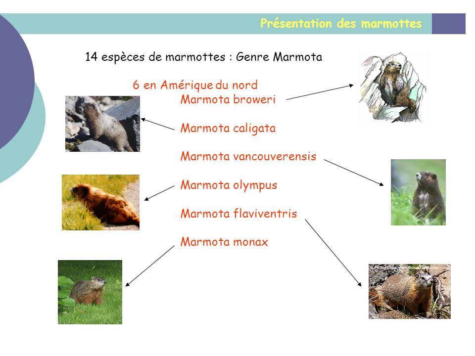 Présentation des marmottes