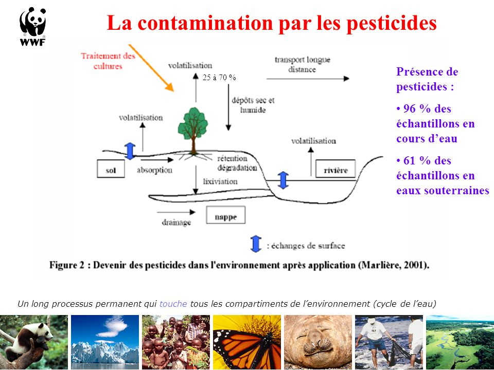 La contamination par les pesticides