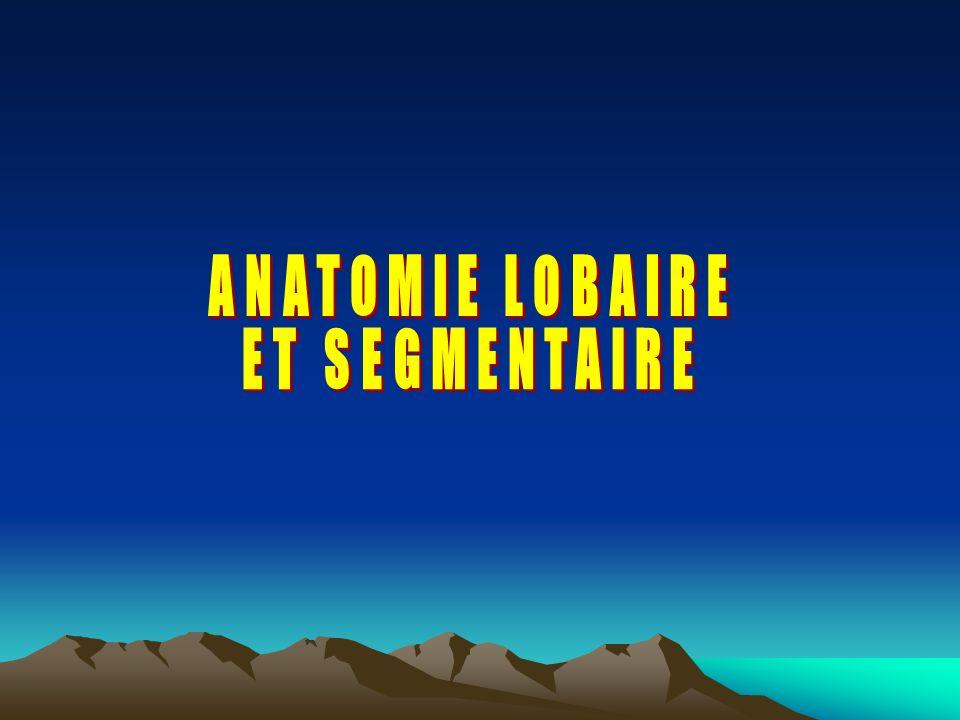 ANATOMIE LOBAIRE ET SEGMENTAIRE
