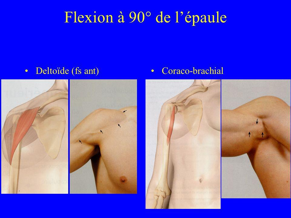 Flexion à 90° de l'épaule Deltoïde (fs ant) Coraco-brachial