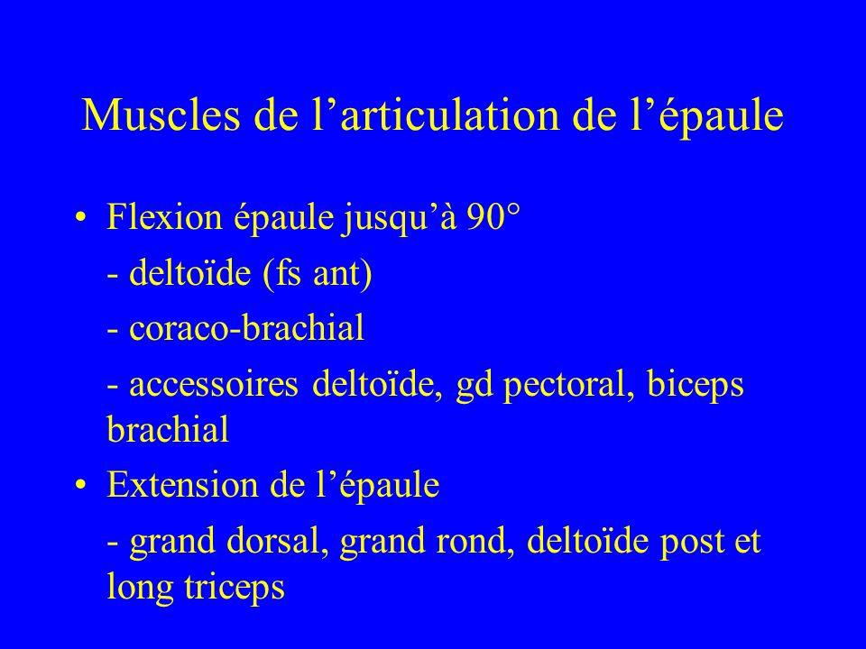 Muscles de l'articulation de l'épaule