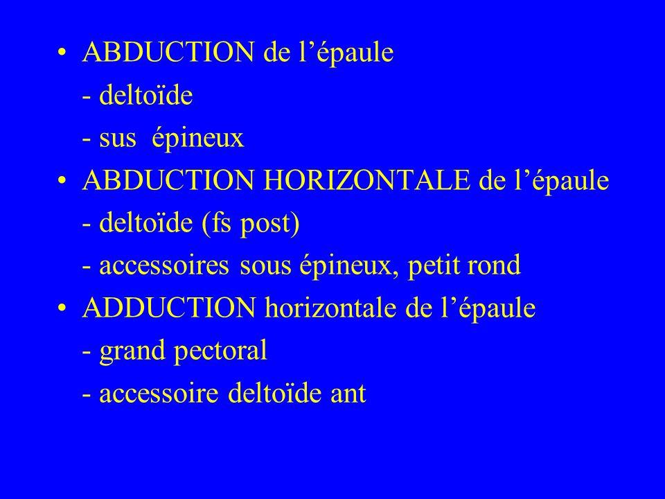 ABDUCTION de l'épaule - deltoïde. - sus épineux. ABDUCTION HORIZONTALE de l'épaule. - deltoïde (fs post)