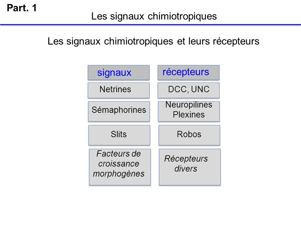Les signaux chimiotropiques