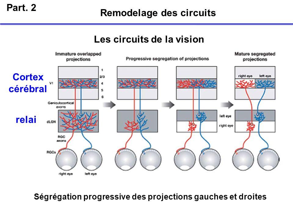 Remodelage des circuits