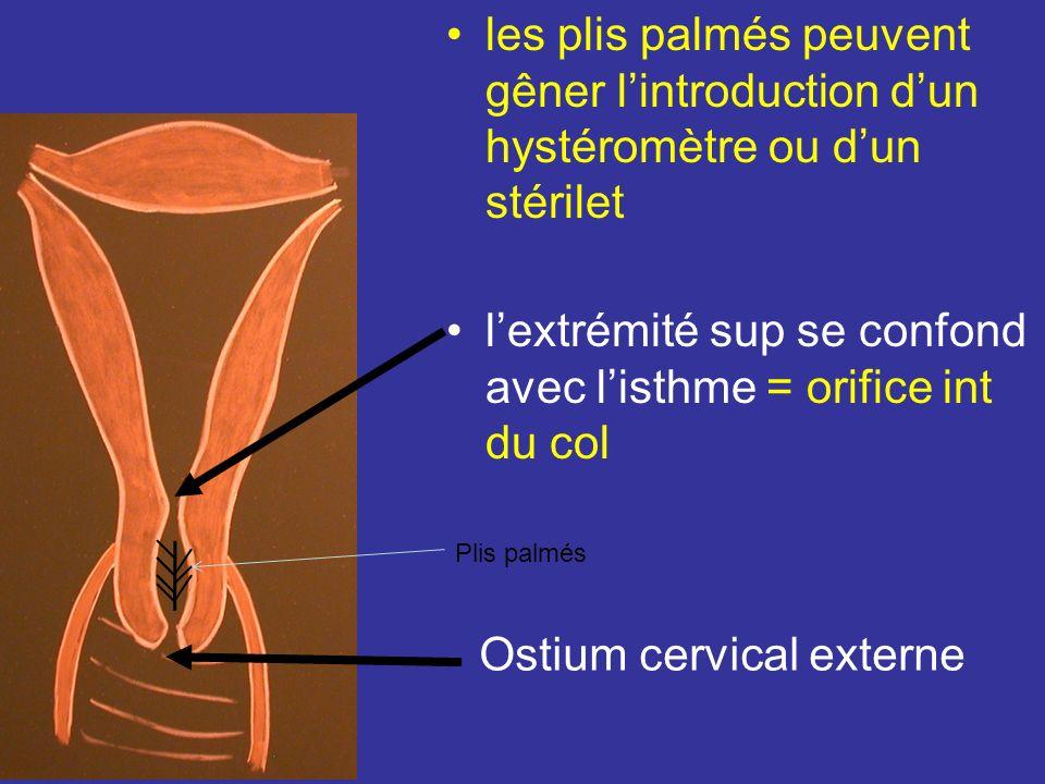 l'extrémité sup se confond avec l'isthme = orifice int du col