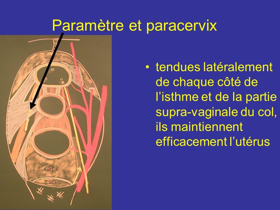 Paramètre et paracervix