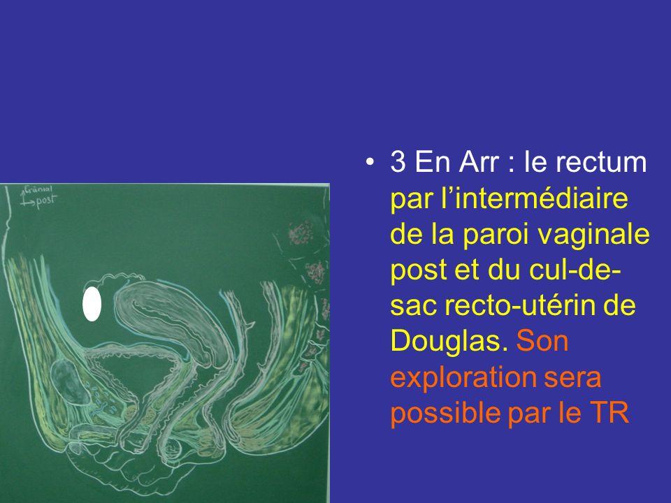 3 En Arr : le rectum par l'intermédiaire de la paroi vaginale post et du cul-de-sac recto-utérin de Douglas.