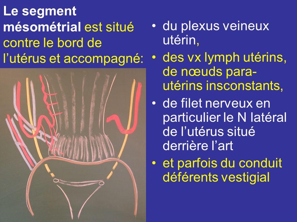 Le segment mésométrial est situé contre le bord de l'utérus et accompagné: