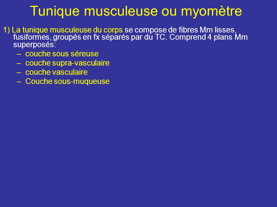 Tunique musculeuse ou myomètre