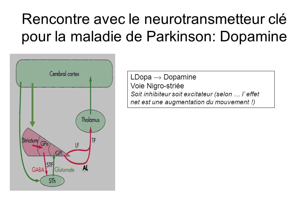 Rencontre avec le neurotransmetteur clé pour la maladie de Parkinson: Dopamine