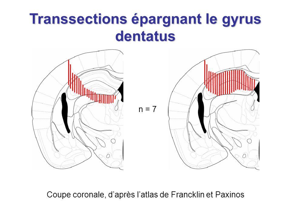 Transsections épargnant le gyrus dentatus