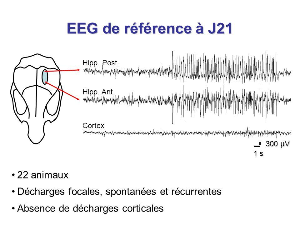 EEG de référence à J21 22 animaux