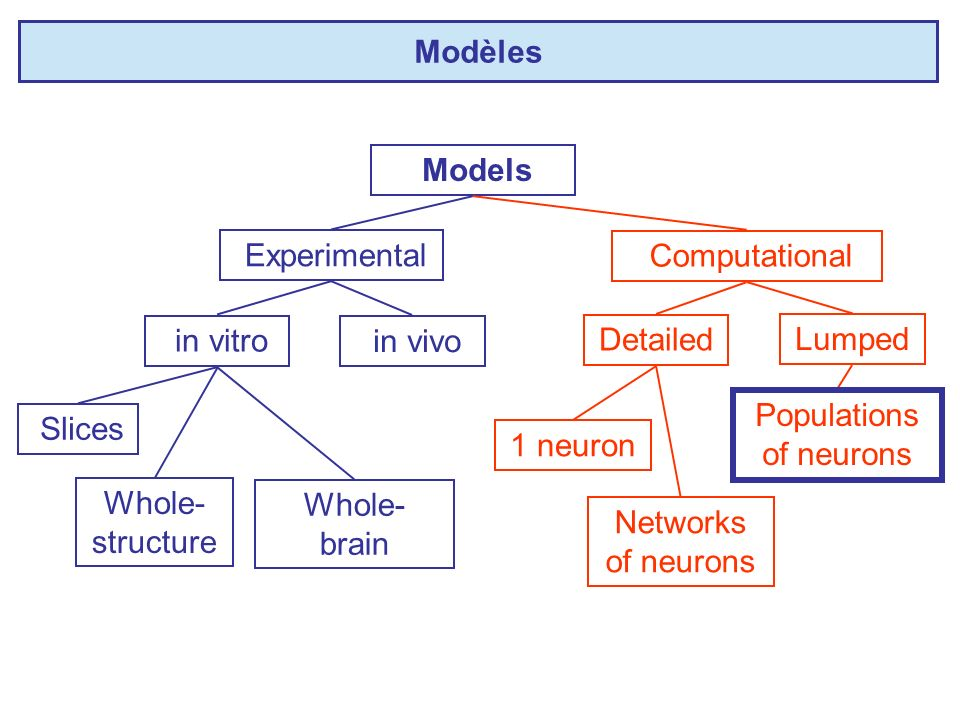 Populations of neurons