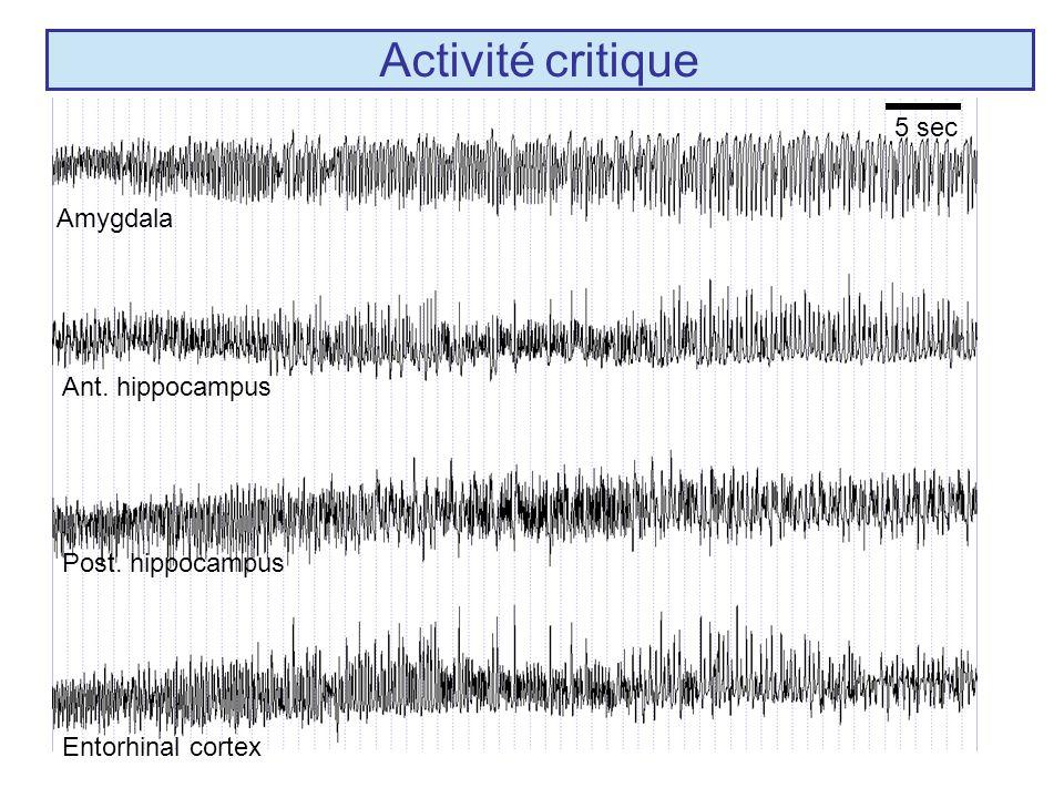 Activité critique 5 sec Amygdala Ant. hippocampus Post. hippocampus