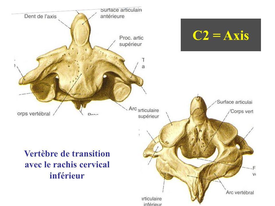 Vertèbre de transition avec le rachis cervical inférieur