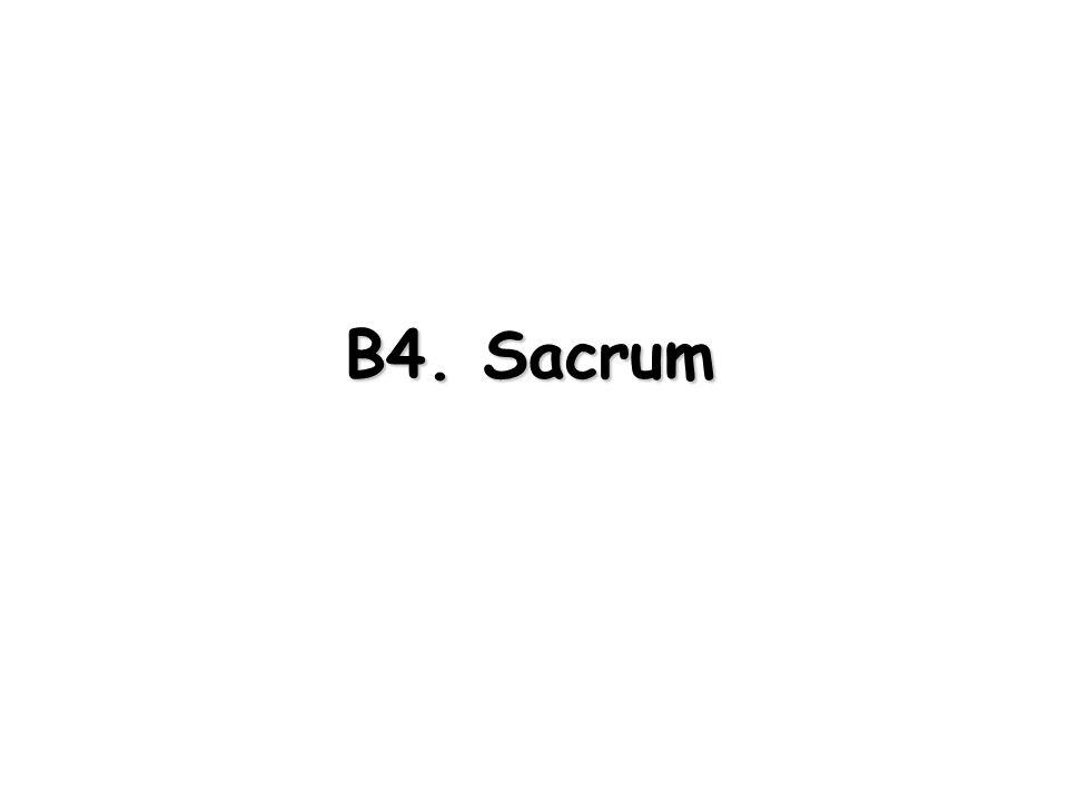 B4. Sacrum