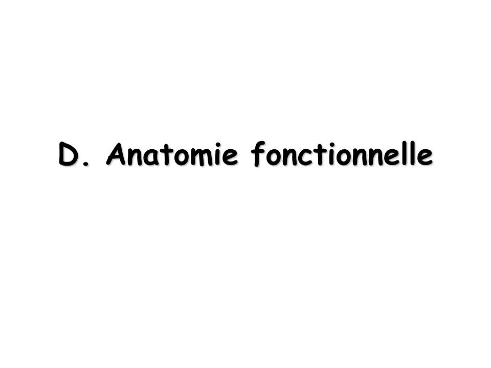 D. Anatomie fonctionnelle