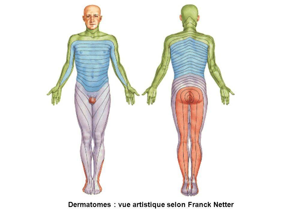 Dermatomes : vue artistique selon Franck Netter