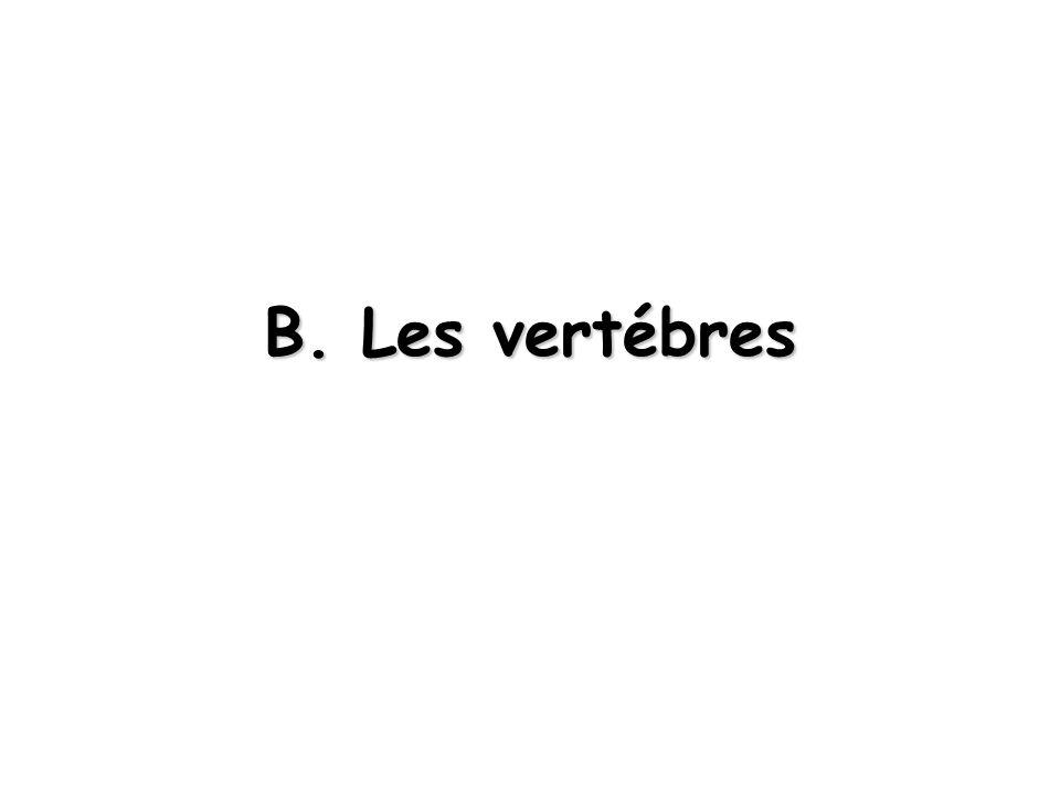 B. Les vertébres