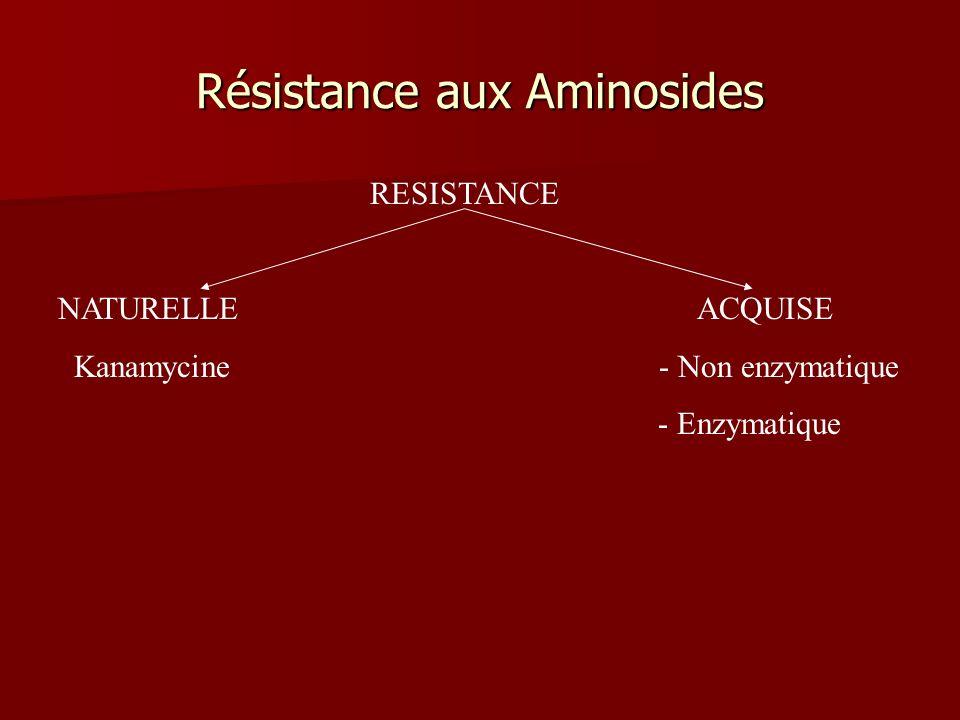 Résistance aux Aminosides