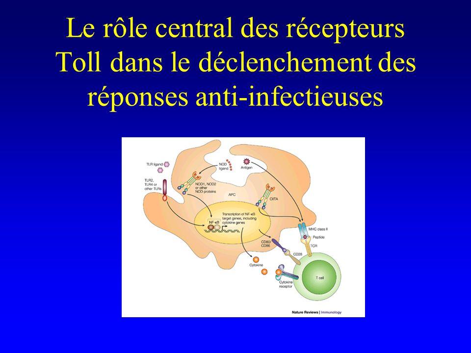 Le rôle central des récepteurs Toll dans le déclenchement des réponses anti-infectieuses