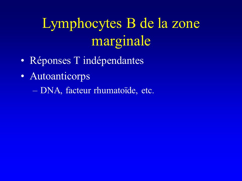 Lymphocytes B de la zone marginale