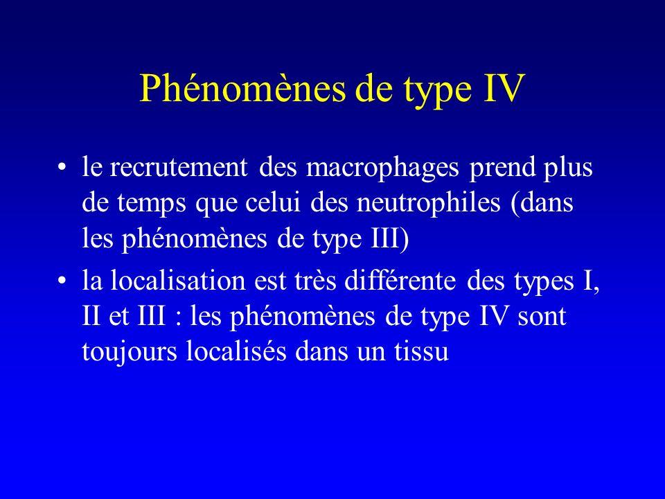 Phénomènes de type IV le recrutement des macrophages prend plus de temps que celui des neutrophiles (dans les phénomènes de type III)