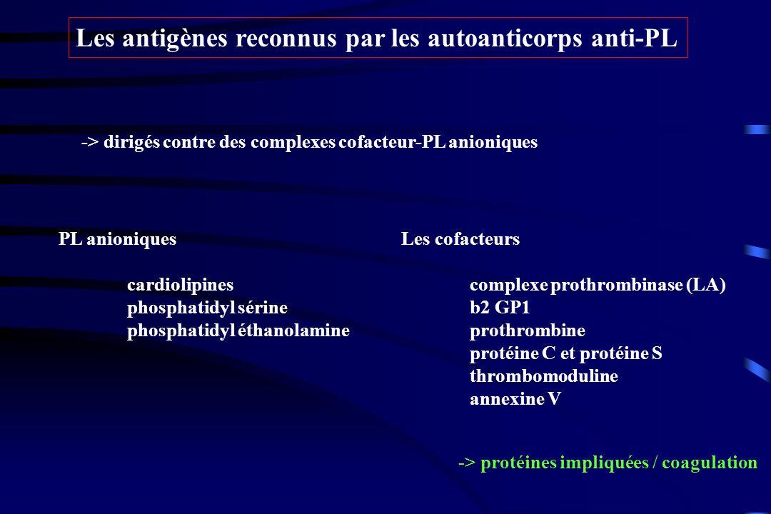 Les antigènes reconnus par les autoanticorps anti-PL