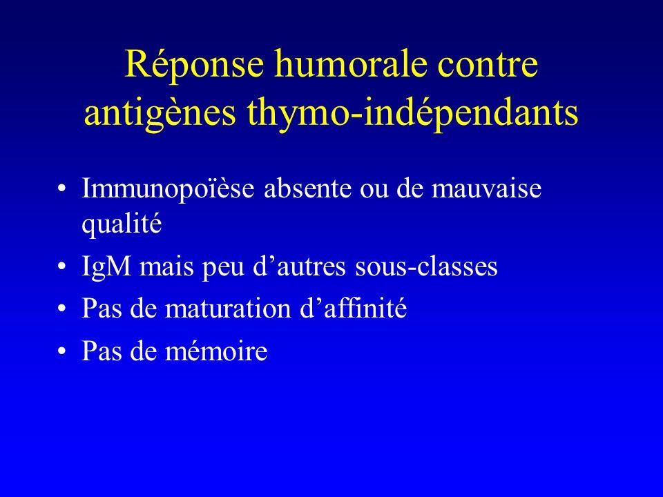 Réponse humorale contre antigènes thymo-indépendants