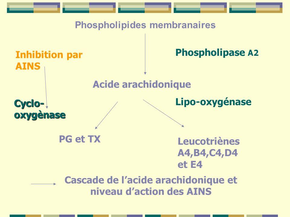 Cascade de l'acide arachidonique et niveau d'action des AINS