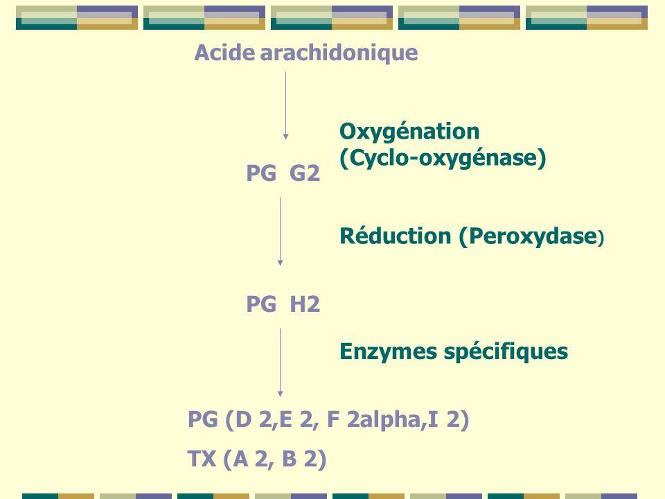 Acide arachidonique Oxygénation (Cyclo-oxygénase) PG G2. Réduction (Peroxydase) PG H2. Enzymes spécifiques.