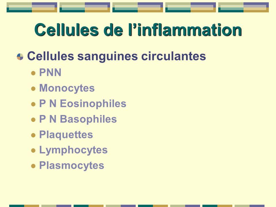 Cellules de l'inflammation