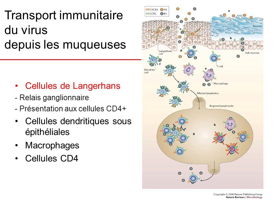 Transport immunitaire du virus depuis les muqueuses