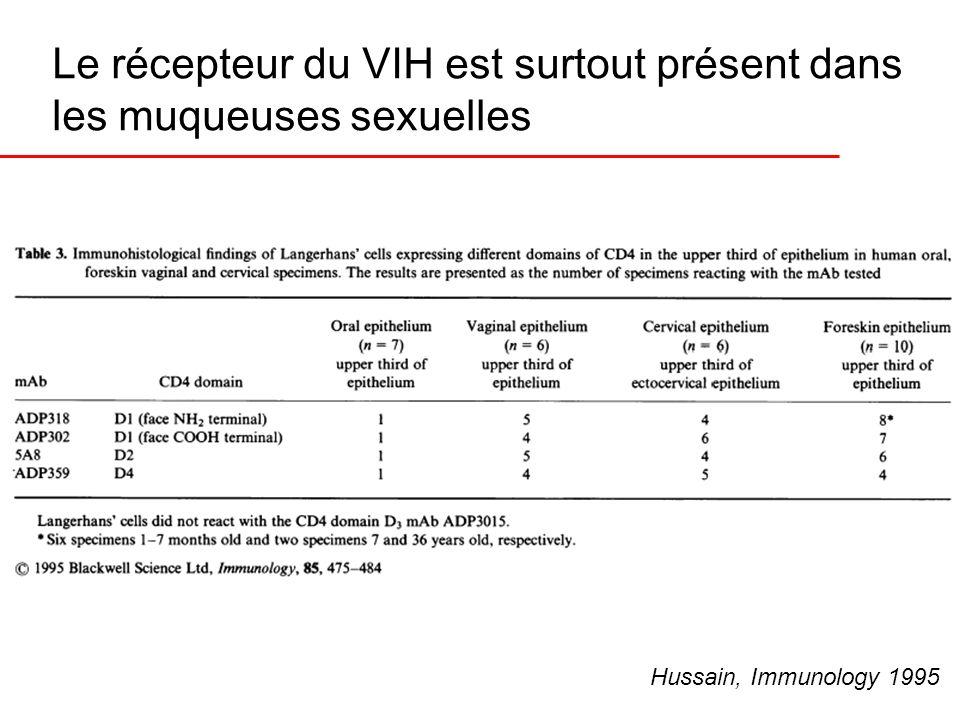 Le récepteur du VIH est surtout présent dans les muqueuses sexuelles