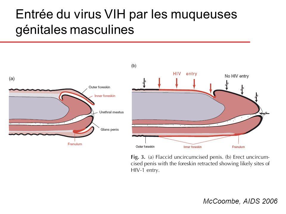 Entrée du virus VIH par les muqueuses génitales masculines