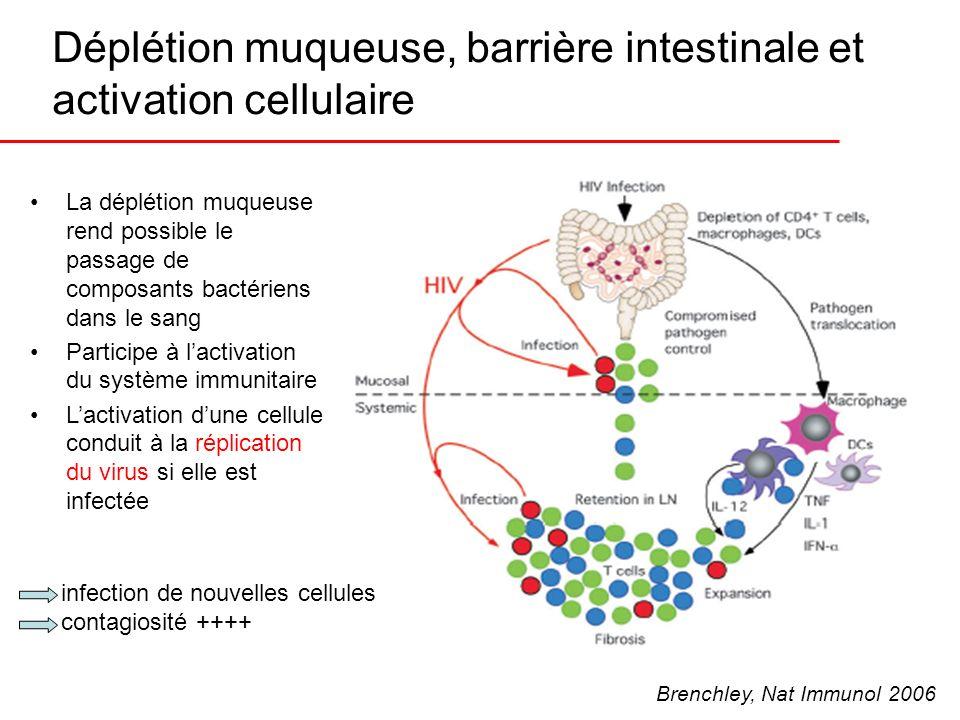Déplétion muqueuse, barrière intestinale et activation cellulaire