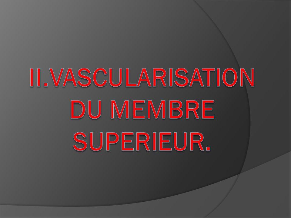 II.VASCULARISATION DU MEMBRE SUPERIEUR.